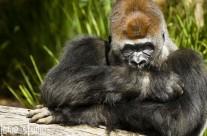 Visiting Werribee Zoo
